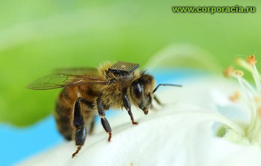 Intel расскажет, почему умирают пчелы