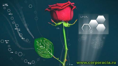 Ученые создали электронную розу