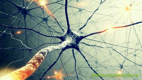 Нейроны изга