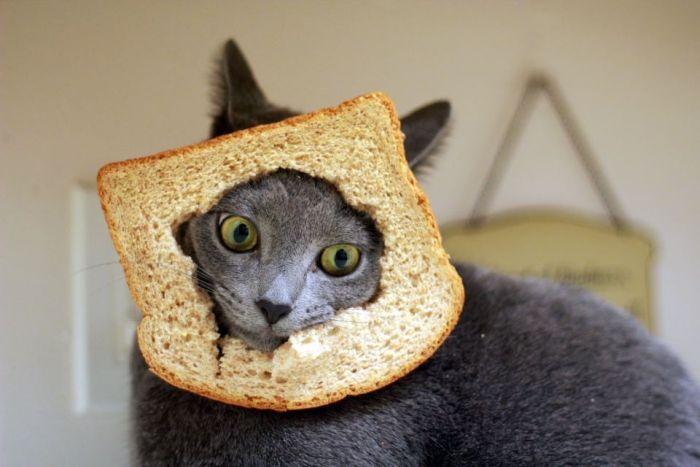 кот в хлебе