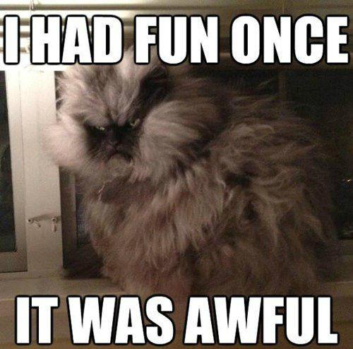 polkovnik meow