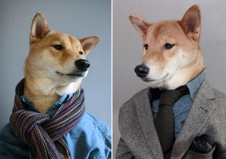 Menswear Dog (Мужская одежда для собак)